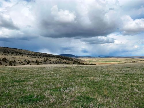 Little Antelope Creek : Harrison : Madison County : Montana