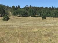 Alpine Meadows : Lake George : Park County : Colorado