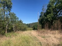 Wooded Acreage in Ozark Mountains : Harrison : Madison County : Arkansas
