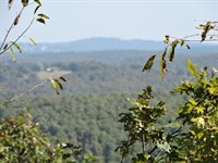 22 Wooded Acres Ozark Mountains : Kingston : Madison County : Arkansas