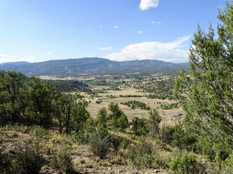 Carracas Canyon Trophy Mule Deer : Navajo City : Rio Arriba County : New Mexico