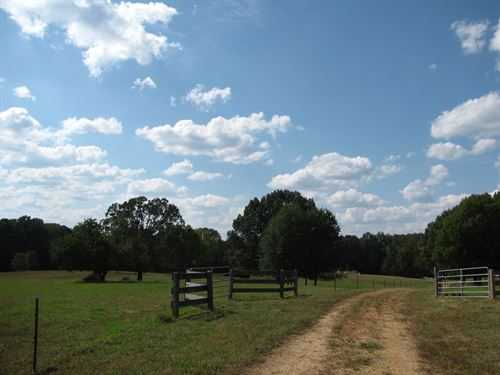 Fenced Pasture Land Tn, Cattle : Sardis : Hardin County : Tennessee