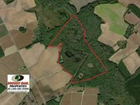 174 Acres of Hunting Land For Sale : Latta : Dillon County : South Carolina
