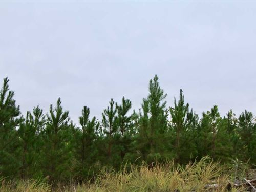 93 Acres in Pleasant Garden, Gu : Pleasant Garden : Guilford County : North Carolina