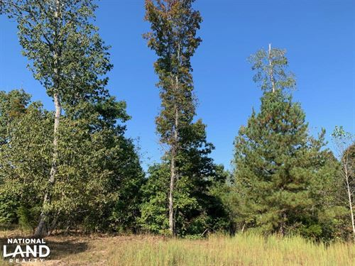 Tennessee River Hunting Property : Sugar Tree : Decatur County : Tennessee