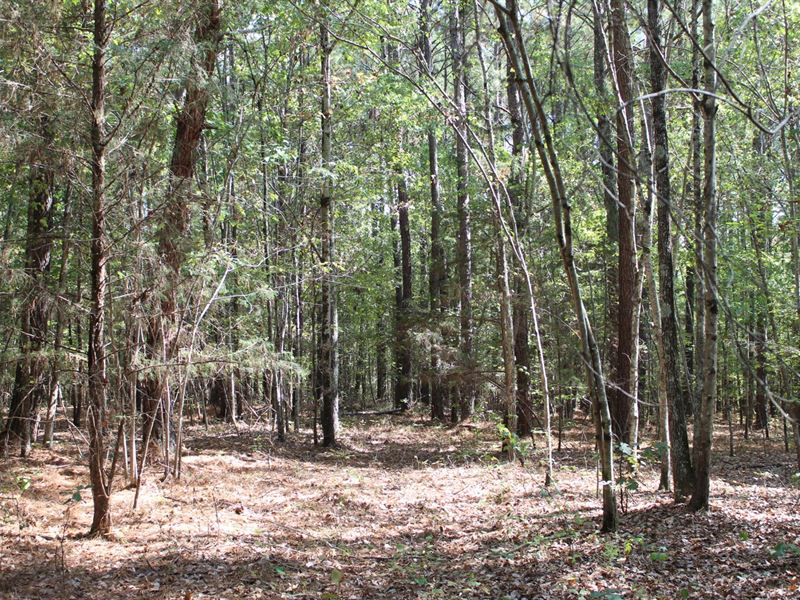 Land McNairy County Tn, 11 Acres : Adamsville : McNairy County : Tennessee