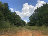 109.75+- Wooded Acres For Home-Site : Taylorsville : Bartow County : Georgia