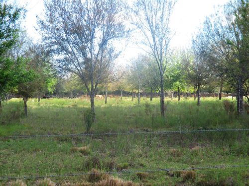 Fenced Pasture With Nice Oak Trees : Fort Pierce : Saint Lucie County : Florida