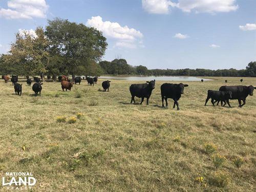 Okolona Pasture OR Development : Okolona : Chickasaw County : Mississippi