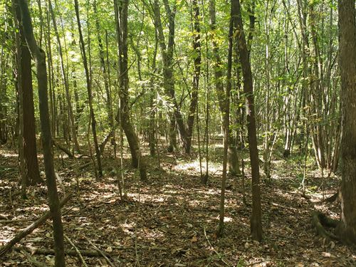 24 Acre Timber Tract : Camden : Wilcox County : Alabama