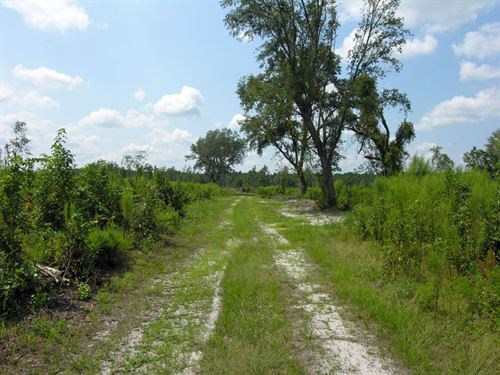 186.436 Acres Cutover Timber Land : Guyton : Effingham County : Georgia