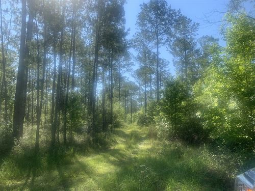 Jim French Road, Booger Pond : Crawfordville : Wakulla County : Florida