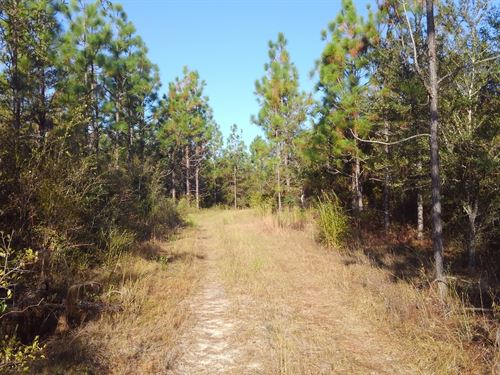 Parrish Road Timberland : Bonifay : Holmes County : Florida