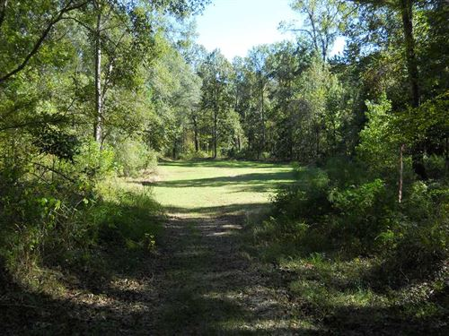 Prime Adams County Hunting And Tim : Natchez : Adams County : Mississippi