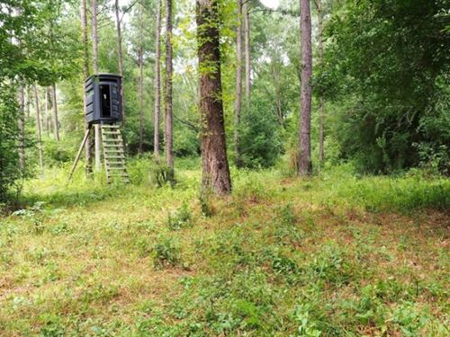 36 Acres Hunting Timber Land For Sa : Jayess : Lawrence County : Mississippi