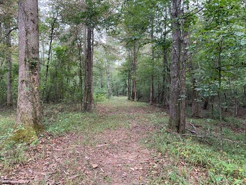 411+/- Acres in Lamar County, Al : Millport : Lamar County : Alabama