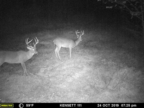 111 Acres, Roughly 85-90 Acres : Searcy : White County : Arkansas
