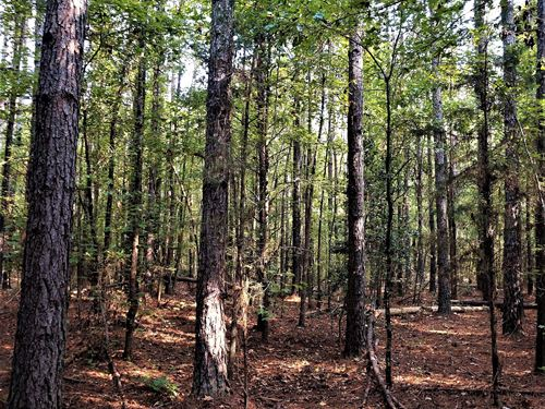 Flat Rock Timber Tract : Honea Path : Greenville County : South Carolina