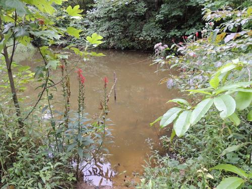 100 Acres W Pond For Only 49,900 : Honaker : Russell County : Virginia