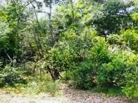 Double Lot in A Quiet Neighborhood : Williston : Barnwell County : South Carolina