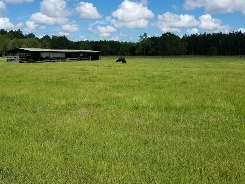 Cattle Ranch, North Central Florida : Waldo : Alachua County : Florida