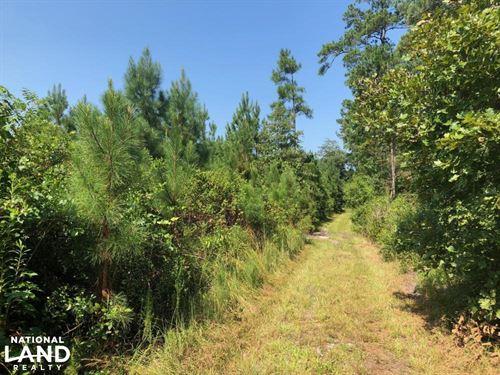 Anderson Creek Tract : Anderson Creek : Harnett County : North Carolina