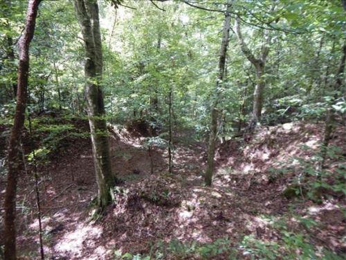 245 Acres In Wilkinson County In Wo : Woodville : Wilkinson County : Mississippi