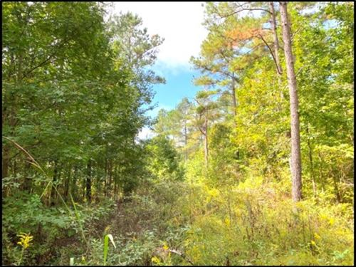 70 Acres In Tallahatchie County : Cascilla : Tallahatchie County : Mississippi