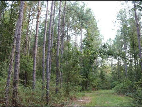 80 Acres In Neshoba County In Phila : Philadelphia : Neshoba County : Mississippi