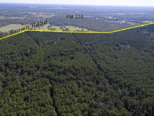 185 Acres Bo Brown Rd Tract 4 : Trinity : Walker County : Texas