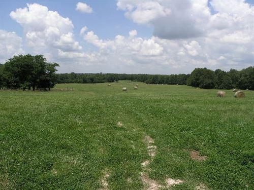 Good Fences, Ponds, Cattle Ready : Hartville : Wright County : Missouri