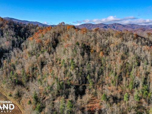 Johns River Hunting And Timber Trac : Lenoir : Caldwell County : North Carolina