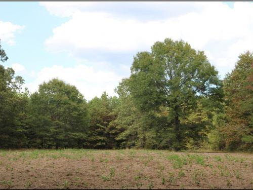 203 Acres In Kemper County In Porte : Porterville : Kemper County : Mississippi