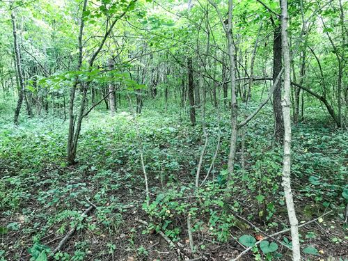 Township Rd 57, 14 Acres : Roseville : Perry County : Ohio