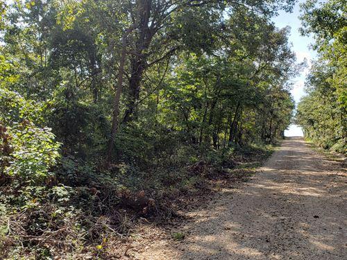 Southern Missouri Woodland For Sale : Macomb : Douglas County : Missouri