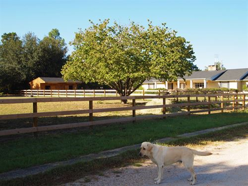 Beautiful 2 Home Cattle Ranch : Williston : Barnwell County : South Carolina
