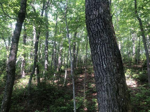 94 Acre Mountain Sanctuary : Saltville : Smyth County : Virginia