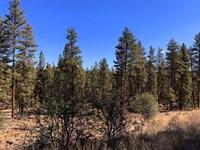 Tall Trees, Great Access, $275/Mo : Bonanza : Klamath County : Oregon