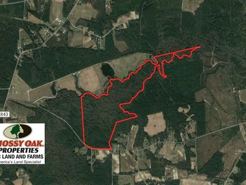 172.7 Acres of Hunting And Timber : Delco : Columbus County : North Carolina