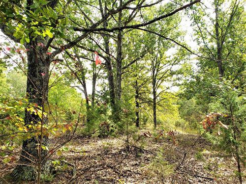 Hunting Property For Sale, Missouri : Vanzant : Douglas County : Missouri