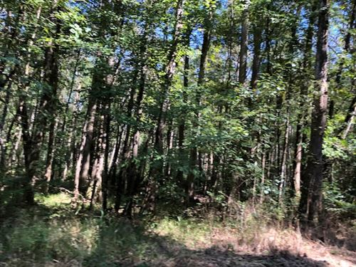 Excellent Hunting Lots Of Hardwoods : Centreville : Amite County : Mississippi