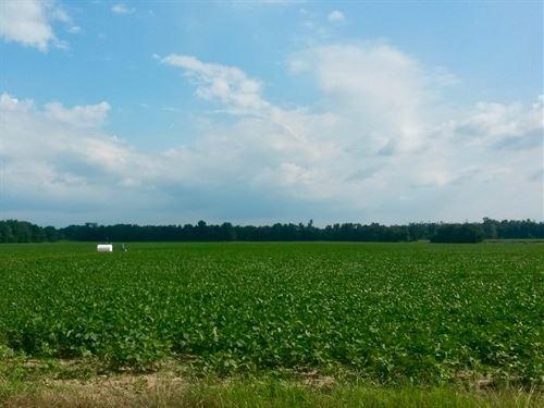 Arkansas Cropland Investment : Lagrange : Phillips County : Arkansas