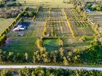 Martin County Lychee Grove : Indiantown : Martin County : Florida