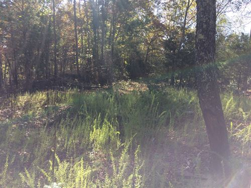20 Acres Wooded Land Maury County : Lyles : Hickman County : Tennessee