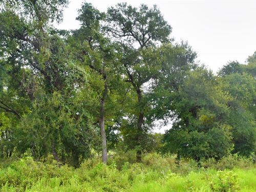 10 Ac S Of Austin, Financing : Redrock : Bastrop County : Texas