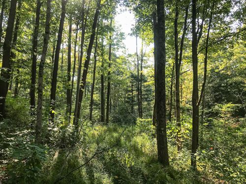 Flint Ridge Rd, 16 Acres : Newark : Licking County : Ohio