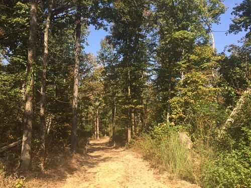 Lagoon Tract : Lobelville : Perry County : Tennessee