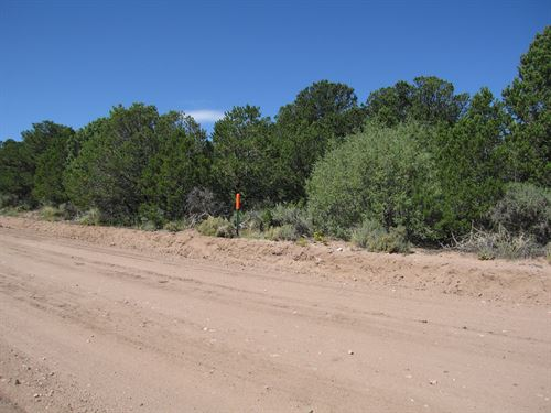 Best Fall Foliage On Your Own Land : Stone Rd : Costilla County : Colorado