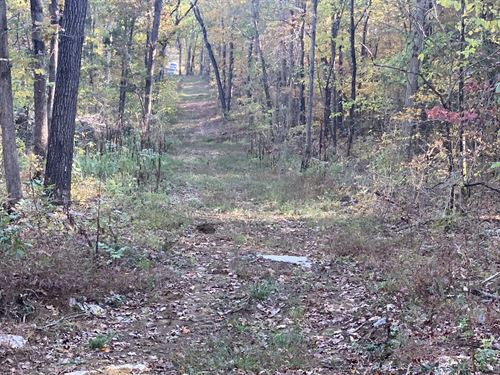 Excellent Western Ky Hunting Farm : Princeton : Caldwell County : Kentucky