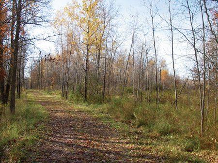 36.71 Ac - Rock Creek #1 : Rock Creek : Pine County : Minnesota